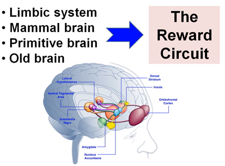 1. Limbic System